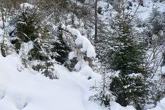 Foresta di inverno coperta da neve bianca fresca, alpi del Tirolo Immagine Stock