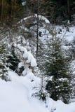 Foresta di inverno coperta da neve bianca fresca, alpi del Tirolo Fotografie Stock Libere da Diritti
