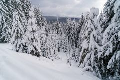 Foresta di inverno coperta da Snow Paesaggio del paese delle meraviglie di inverno Fotografia Stock