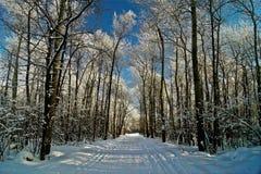 Foresta di inverno coperta di gelo. Fotografia Stock