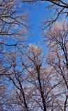Foresta di inverno coperta di gelo. Immagini Stock