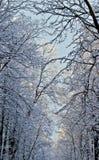 Foresta di inverno coperta di gelo. Fotografie Stock