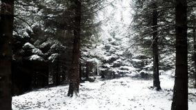 Foresta di inverno coperta di neve Immagini Stock