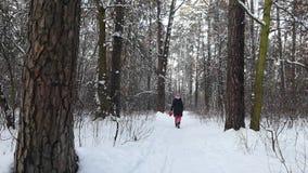 Foresta di inverno in cui cammina la ragazza Isolato su bianco stock footage