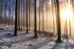Foresta di inverno del faggio Immagine Stock