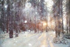 Foresta di inverno del fondo Fotografie Stock Libere da Diritti