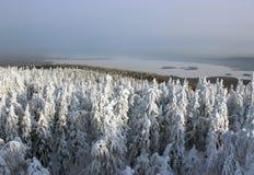 Foresta di inverno della montagna Immagine Stock Libera da Diritti