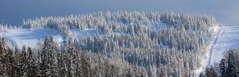 Foresta di inverno della montagna Fotografia Stock