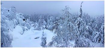 Foresta di inverno della montagna nella nebbia Fotografia Stock Libera da Diritti