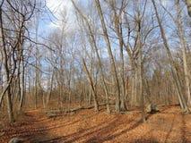 Foresta di inverno della Nuova Inghilterra Fotografia Stock