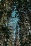 Foresta di inverno della Repubblica di Karachaevo-Cherkesskaya, Dombai, alberi, abete rosso, cielo, montagne, senza fine, blu, ma fotografie stock libere da diritti