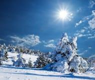 Foresta di inverno di Showbound Immagini Stock