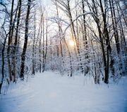 Foresta di inverno di Snowy Fotografia Stock