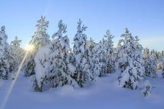 Foresta di inverno di Snowy al tramonto Fotografia Stock Libera da Diritti