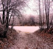 Foresta di inverno, dicembre Fotografia Stock