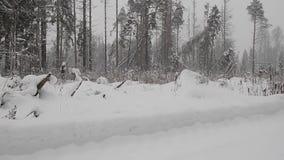 Foresta di inverno durante una bufera di neve e la neve pesanti video d archivio