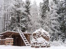 Foresta di inverno e pila di legno Immagine Stock