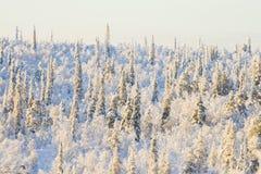 Foresta di inverno il giorno pieno di sole Fotografia Stock Libera da Diritti