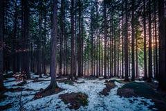Foresta di inverno in Karkonosze fotografie stock