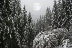 Foresta di inverno, le alpi, Austria Fotografia Stock Libera da Diritti