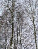 Foresta di inverno di mattina nel villarge Fotografie Stock