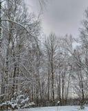 Foresta di inverno di mattina nel villarge Fotografia Stock Libera da Diritti