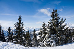 Foresta di inverno in montagne. Immagini Stock