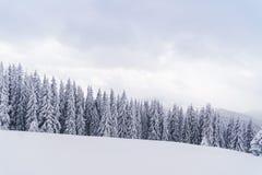 Foresta di inverno in montagne: abeti e colline nevosi su fondo Immagini Stock Libere da Diritti