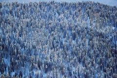 Foresta di inverno in montagne di Caucaso Fotografia Stock Libera da Diritti