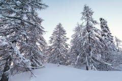 Foresta di inverno in montagne di Julian Alps Fotografie Stock