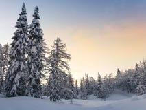 Foresta di inverno in montagne di Julian Alps Fotografia Stock Libera da Diritti