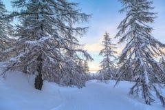 Foresta di inverno in montagne di Julian Alps Fotografia Stock