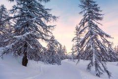Foresta di inverno in montagne di Julian Alps Immagine Stock Libera da Diritti