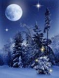 Foresta di inverno di Natale alla notte fotografia stock
