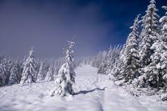 Foresta di inverno in nebbia Immagini Stock