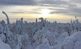 Foresta di inverno nel tramonto Fotografie Stock Libere da Diritti