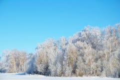 Foresta di inverno nella brina Fotografia Stock Libera da Diritti