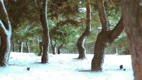 Foresta di inverno nella neve stock footage
