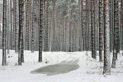 Foresta di inverno nella neve Fotografie Stock Libere da Diritti