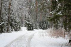 Foresta di inverno nella neve Immagini Stock