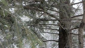 Foresta di inverno nelle montagne video d archivio