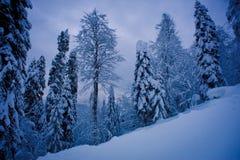 Foresta di inverno nelle montagne Fotografie Stock Libere da Diritti