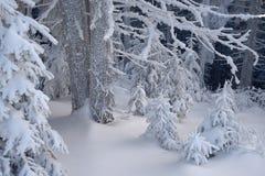 Foresta di inverno in neve immagine stock libera da diritti