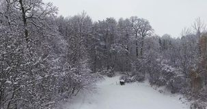 Foresta di inverno in neve stock footage