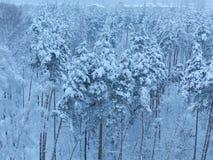 Foresta di inverno in Russia Fotografia Stock