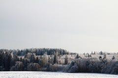 Foresta di inverno in Russia paesaggio Immagini Stock Libere da Diritti