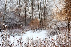 Foresta di inverno di Snowy e lago congelato Immagine Stock Libera da Diritti