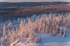 Foresta di inverno sotto neve Fotografie Stock