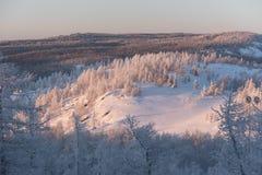 Foresta di inverno sotto neve Immagine Stock