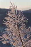 Foresta di inverno sotto neve Fotografie Stock Libere da Diritti